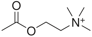 1200px-Acetylcholine.svg
